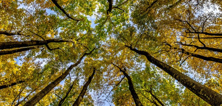 Skyline Drive Fall trees at Shenandoah National Park Virginia.