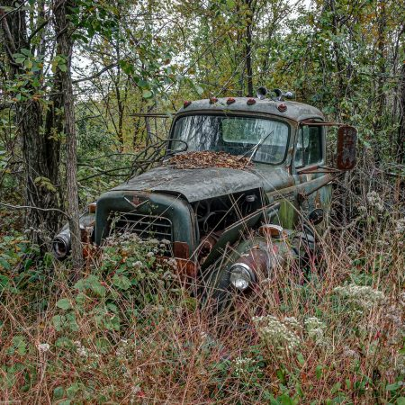 Classic International pickup truck in woods surrounded by queen Ann's lace.