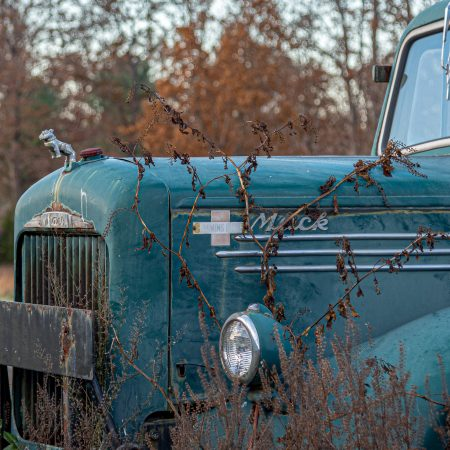 Old 1940s green Mack truck with standing bulldog on grill.