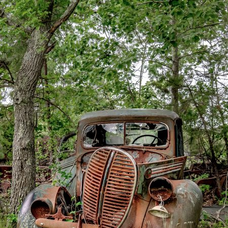 1938 Ford One Ton Pickup Truck surrounded by trees, vines and brush.