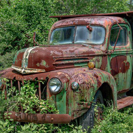 Vintage Ford dump truck framed by brush and vines.